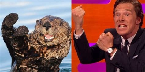 Benedict Cumberbatch Otter Meme - benedict cumberbatch otter memes www pixshark com