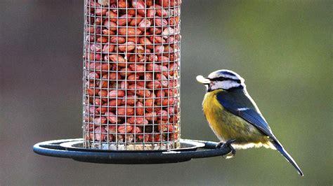 Rspb Big Garden Birdwatch Start Twitching by Big Garden Bird Driverlayer Search Engine