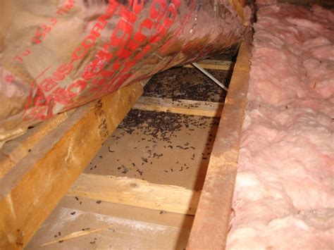 Bat Exclusion Services   BatGuys Wildlife update September