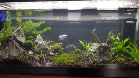 aquascape reddit 20l aquascape for gringo aquascape