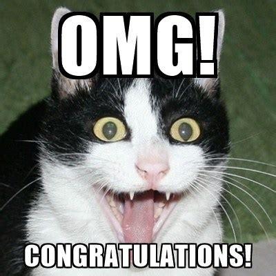 Omg Cat Meme - top 7 best cute funny cats memes on internet