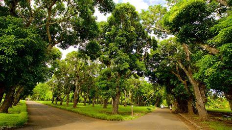 Mauritius Botanical Garden Plemousses Botanical Garden In Plemousses Expedia