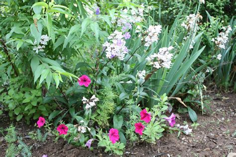 all the dirt on gardening divide perennial flowers late summer and early fall