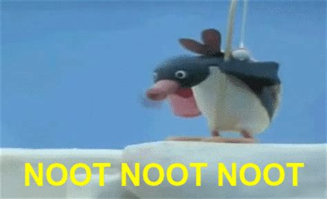 Noot Noot Meme - noot noot noot noot noot know your meme