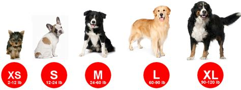 Apartment Dogs 50 Pounds Size Chart Mti Adventurewear Specializing In