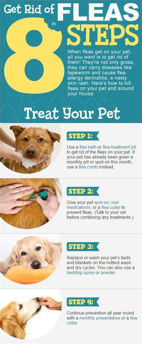 how to get rid of fleas how to