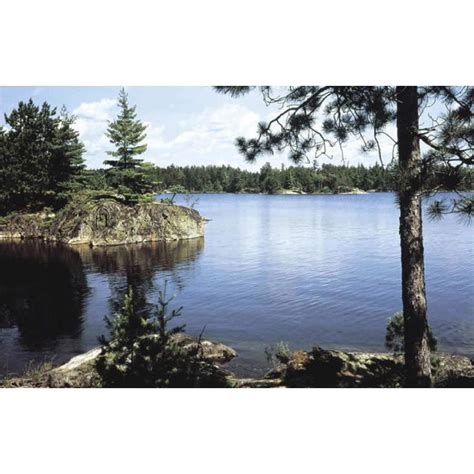 wall mural pricing shop environmental graphics lake in the woods wall mural