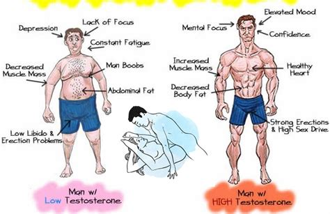 testosterone definition of testosterone by medical natural testosterone the top 7 ways to boost it gym