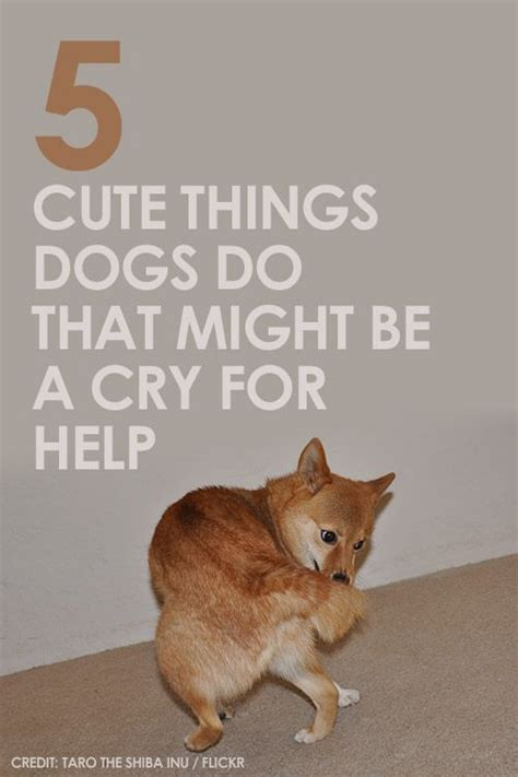 puppy cries at 1736 best images about cats are awesome on