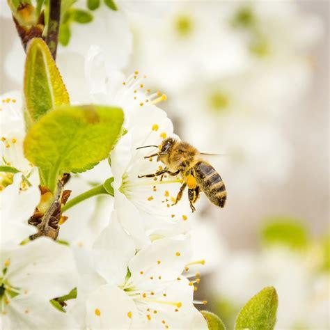 wespen im garten vertreiben der richtige umgang mit bienen im garten bei westfalia