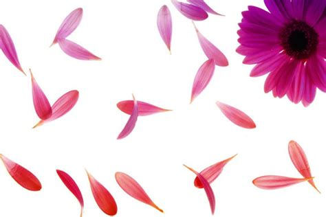 significati dei fiori il significato dei fiori