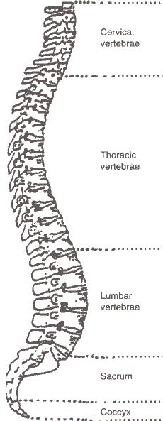 diagram of spine discs 5 best images of diagram of cervical spine and discs