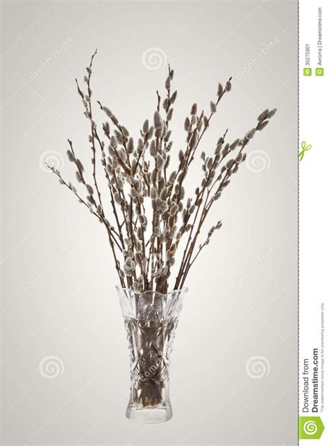 Branch Vase by Branches Of The Willow With Flowering Bud In Vase Stock Image Image 35275901