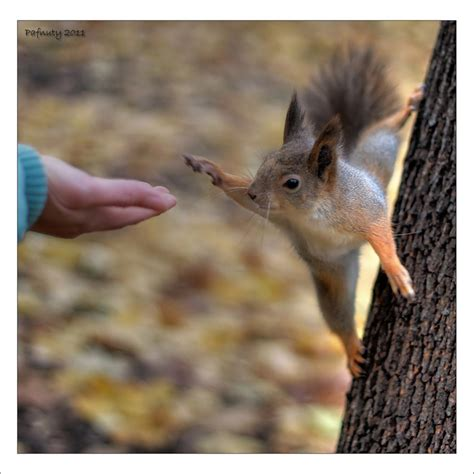 high five high five animals photos