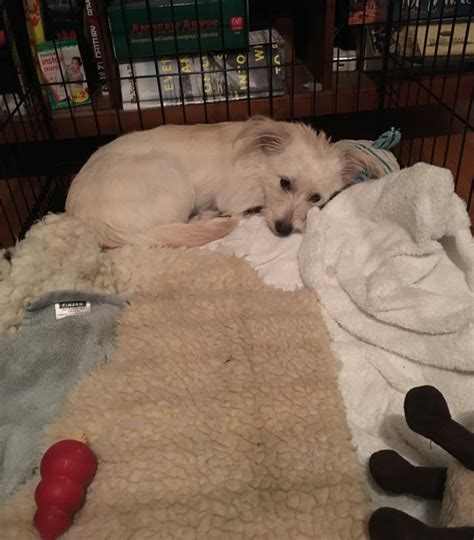 puppy spay recovery what to expect when you neuter your my friend is a