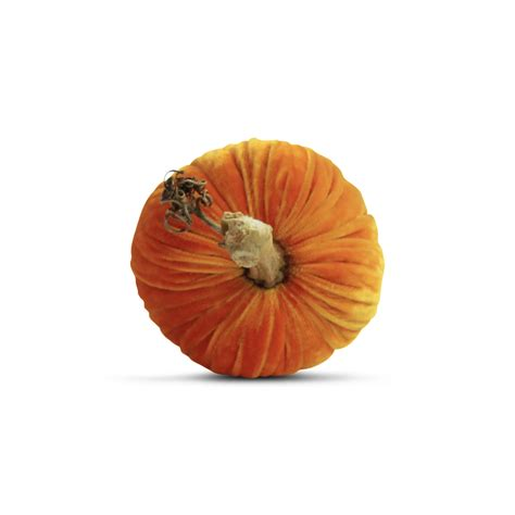 decorative pumpkins plush pumpkin 10 quot decorative pumpkin carrot