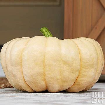 porcelain doll dictionary pumpkin