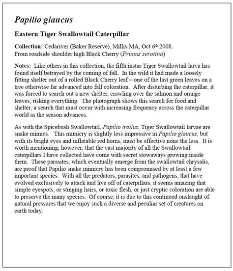 Tears Of A Tiger Essay by Tears Of A Tiger Theme Essay Reportthenews202 Web Fc2