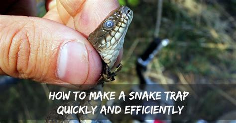 How Does It Take For A Snake To Shed how to make a snake trap quickly and efficiently captain