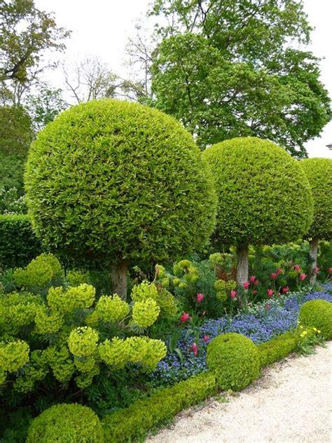 Garten Hecken Pflanzen by Sichtschutz Heckenpflanzen Formen Garten Kugeln Buchsbaum