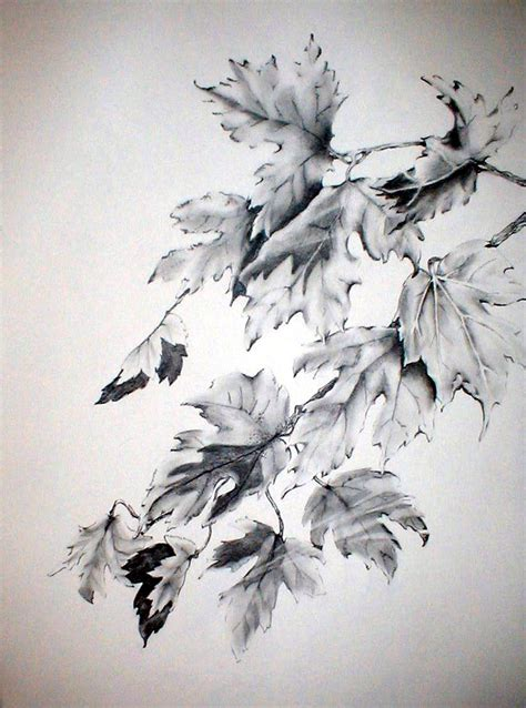 Drawing Leaves by Fall Leaves Pencil Drawing My Watercolors