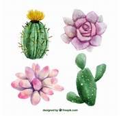 Aquarell Von Hand Gemalten Blumen Und Kakteen  Download