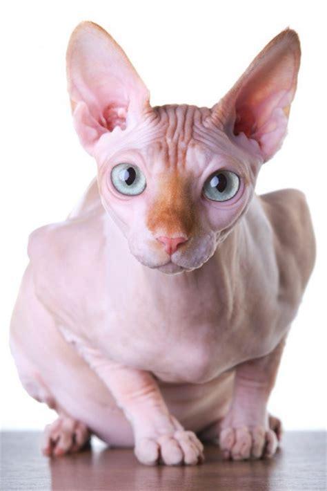 imagenes egipcias de gatos im 225 genes las mejores im 225 genes de la red page 67