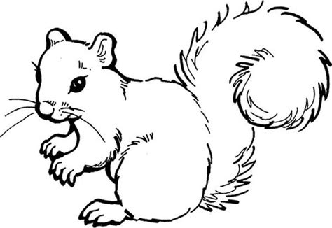 coloring page of a gray squirrel squirrel coloring pages koloringpages