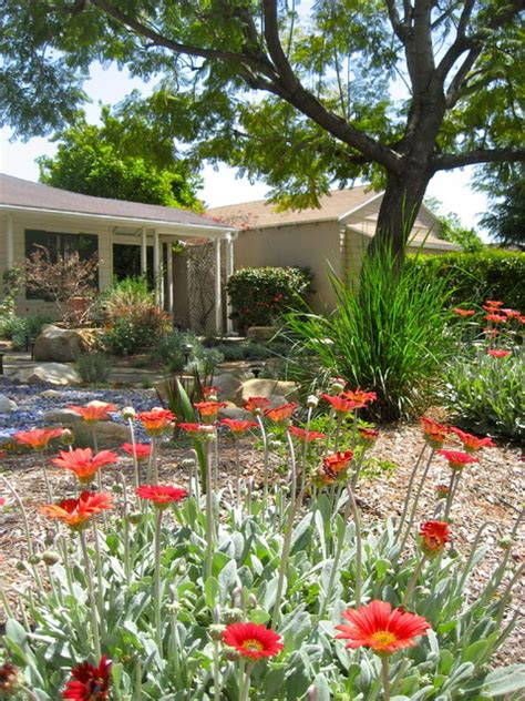 front yard no grass designs photos lawn less front yard design by shirley bovshow of