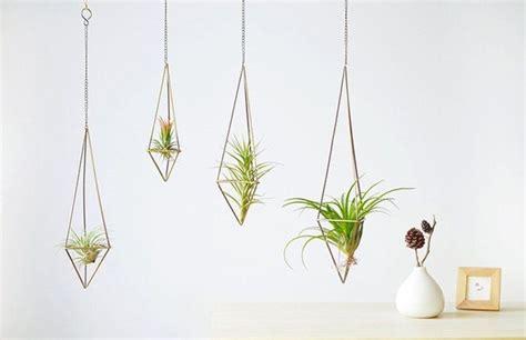 best small hanging plants indoor hanging plants www pixshark com images