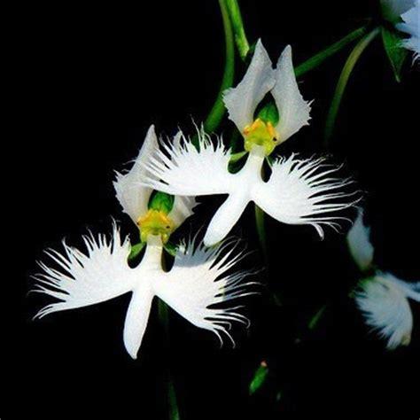 Aliexpress.com : Buy 2015 HOT SALE World's Rare Flowers