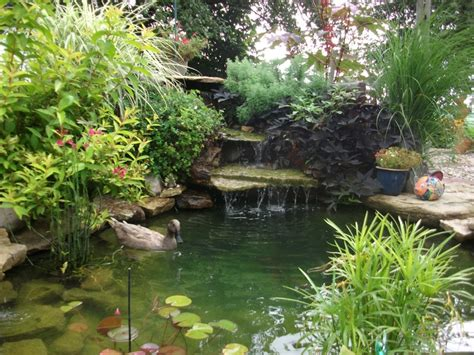 Backyard Duck Pond Ideas Duck Pond Idea Backyard Ideas Pinterest