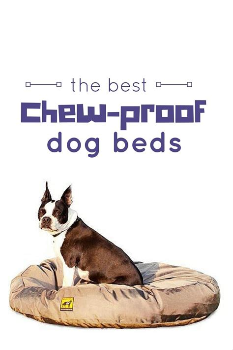 best dog bed for chewers best dog bed for chewers beauteous best chew proof dog