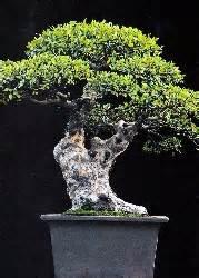 fiori finti firenze samen rarit 228 ten bonsai