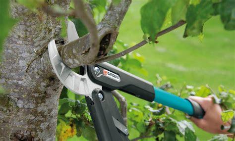 wann schneidet apfelbã ume apfelbaum schneiden selbst de