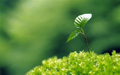 plant wallpaper moisturizing eye series sprout leaves wallpaper 7 plant