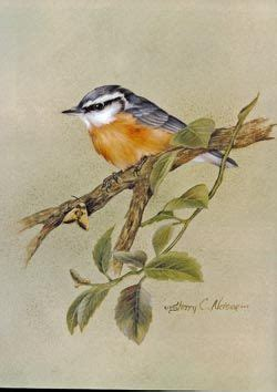 Painting Songbirds With Sherry C Nelson sherry nelson decorative painter painting songbirds