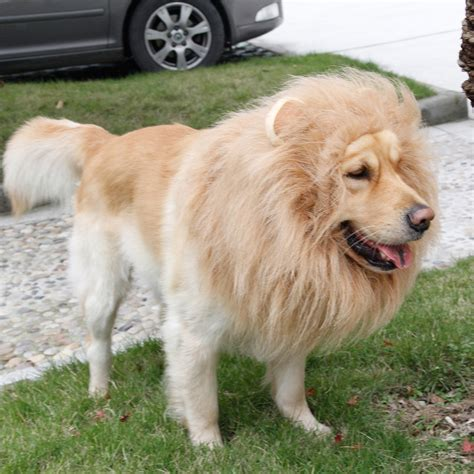 golden retriever costume aliexpress buy fancy dress up pet costume mane wig for large dogs