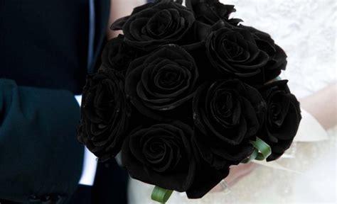 imagenes de rosas negras y moradas imagenes de rosas negras y moradas imagui