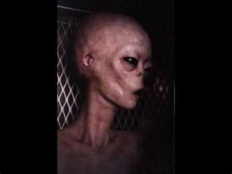 Search Real Real Aliens Images Search