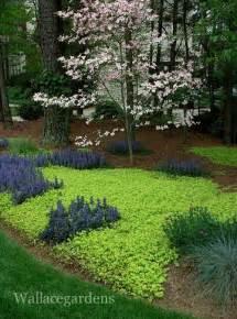 bodenabdeckung garten best 25 ground cover plants ideas on