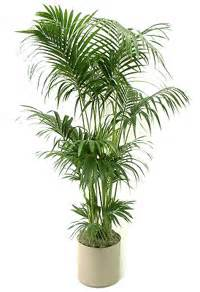 Houseplants For Low Light Areas by Bright Ideas For Low Light Areas Dennis 7 Dees