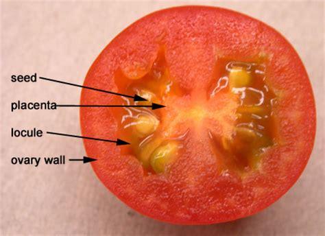 Solanaceae Biology 343
