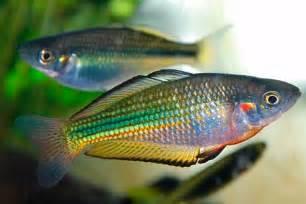 Top fish types to keep as pets   PetSpot