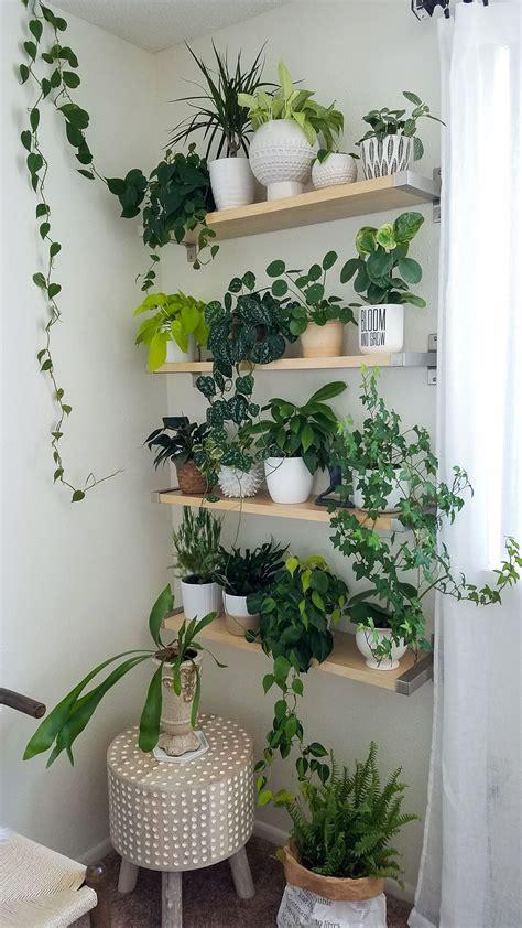 plant wall houseplants decorating  plants plant
