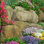 Scottish Rock Garden Society Gardening Wildlife Clubs Societies In The Uk