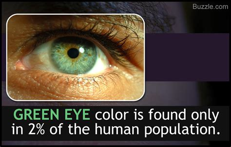 interesting colors eye color chart interesting facts about the different