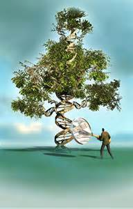 Dpi rick nease color illustration of tree whose trunk looks like a dna