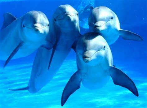 delfines amigos 191 sab 237 as que los delfines tienen la mejor memoria del mundo animal planeta curioso