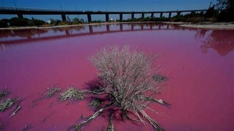 pink lake melbourne port melbourne s westgate park lakes turn pink